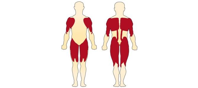 Spinal Musküler Atrofi(SMA)