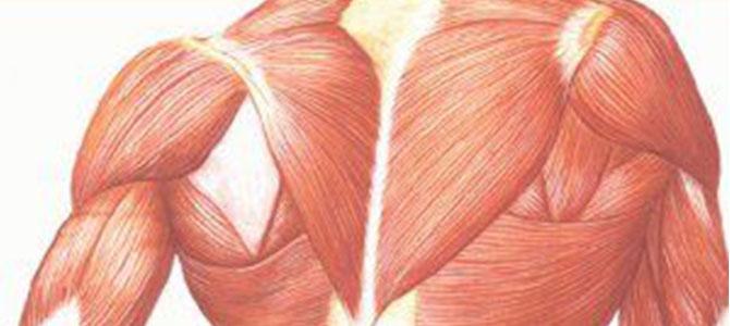 Myopathy Rehabilitation
